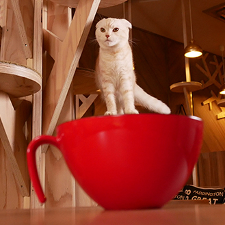 Cat on the Cup.