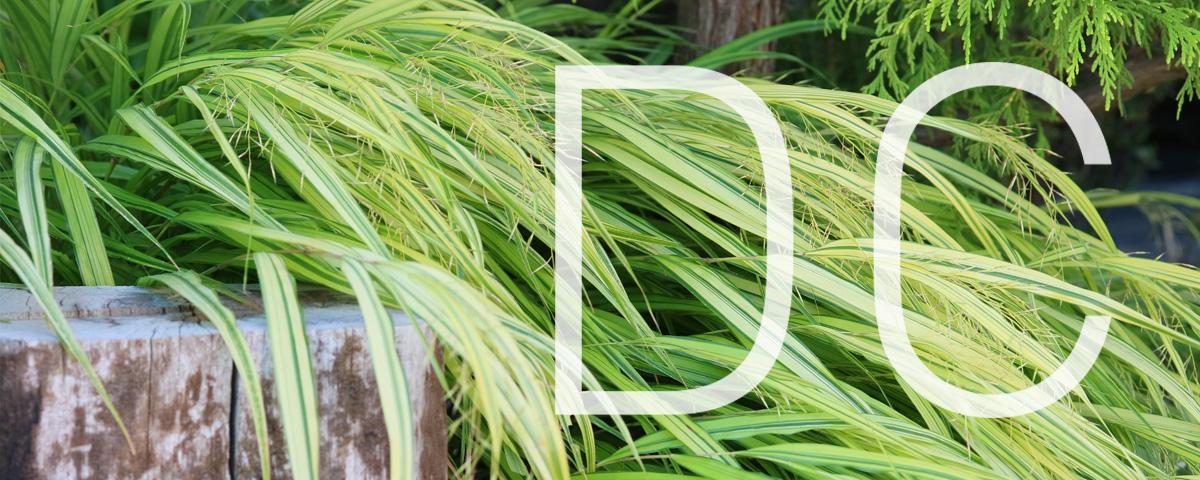 「省エネで静かな風を創生」のメイン画像です。緑のイメージに「DC」の文字が入った画像です。