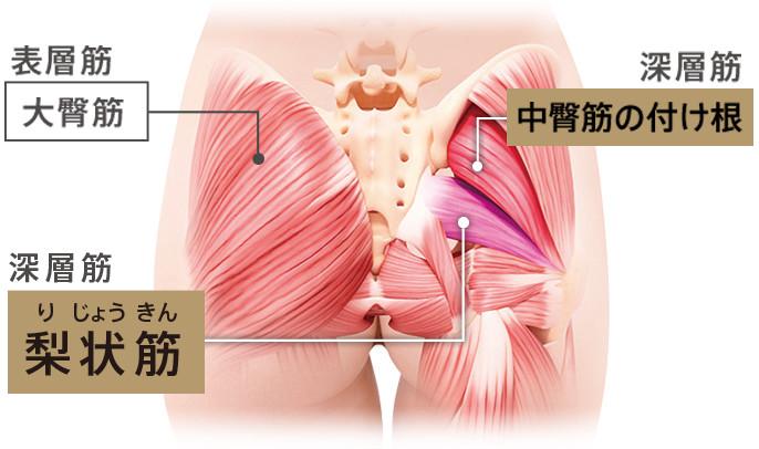 を 筋肉 ほぐす の おしり