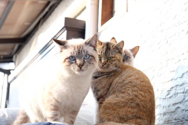 今年で3年目!「尾道イーハトーヴ猫祭り2018フォトコンテスト」を開催~広島県尾道市の魅力を発信~【LUMIX CLUB PicMate】