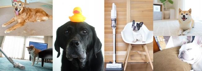 <掃除は大変だけど、やっぱり愛おしい!>愛犬の「抜け毛」あるあるをフレブル・レトリバー・柴犬の3犬種で調査!1年分の抜け毛量イメージは富士山級!?