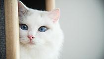 2月22日は猫の日! ニャンスタグラマーバロンくんの可愛さ・人気の秘密を徹底解剖!