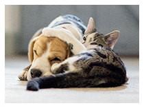 「ジアイーノ」の「ペット」に関するコンテンツをまとめています。